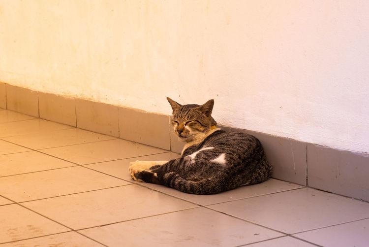 Portrait of cat sitting on tiled floor against wall
