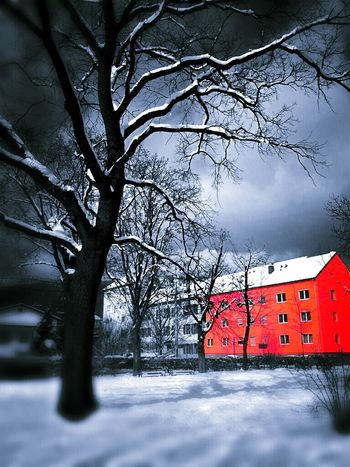 Living in a red house The Little Red Something