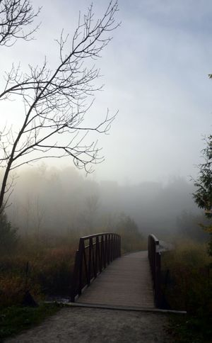 Fog Foggy Fall Riverside Streamzoofamily