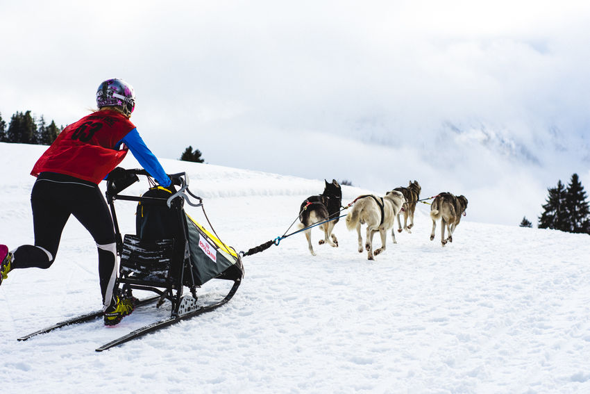 Run If You Can! Funtimes Adventure Animal Themes Dogsledding Dogteam Feel The Same Freedom Of Expression Full Length Fun Human Vs Animal Husky Lifestyles Outdoors Stayandwander Showcase: February Side By Side Sleddog Sleigh Sport Teamwork Togetherness Unrecognizable Person Warm Clothing Wintersport Running