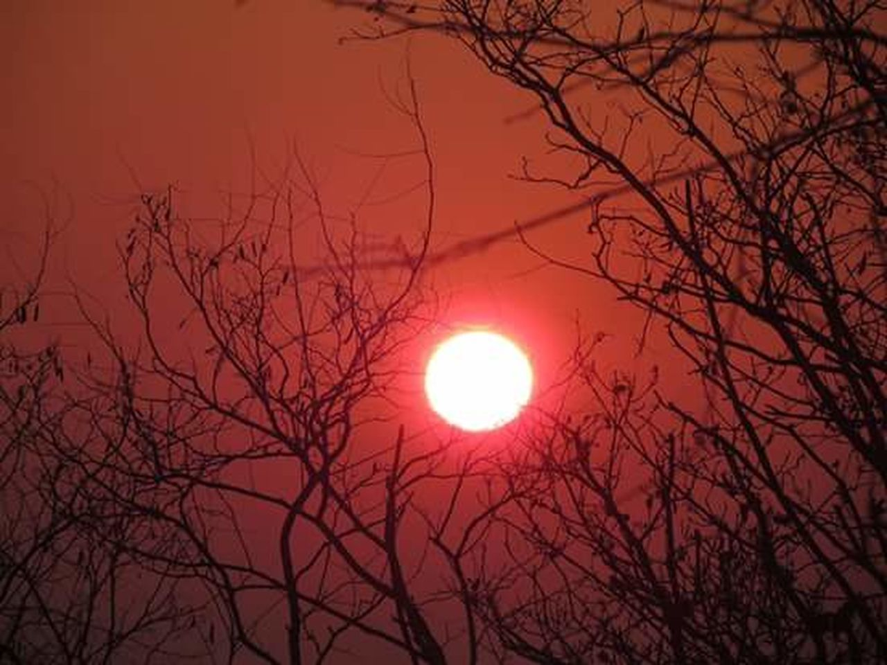 bare tree, moon, sun, branch, low angle view, beauty in nature, outdoors, sky, nature, scenics, tree, red, no people, astronomy