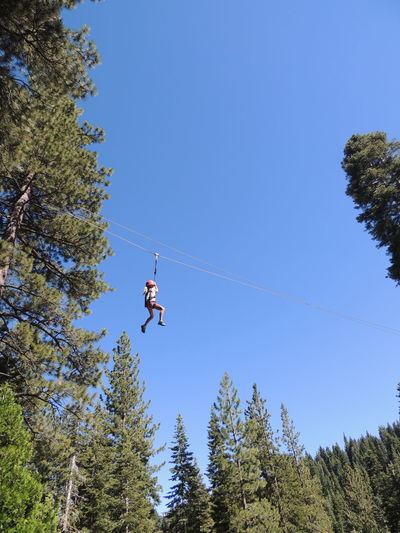 Low angle view of man jumping in forest against clear blue sky
