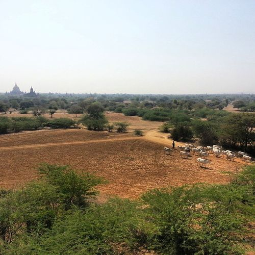 Bagan is magic, Myanmar new Travel blog coming soon Adventure Instapassport Instatravel Instaworld Instapic Instagood Instadaily Travelingram Travelgram Traveling Travelling Traveltheworld Tourist Travelphotography Photowall Photooftheday Thebest_capture Globe_travel Nature Gopro Nofilter Landscape Tourism onelove instanature perfectday burma trip