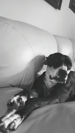 PawfectPhotography Animal Photography Animal_collection Dog Dog Love Dog Lover Dog Life Dog Portrait I Love My Dog Pitbull Love Pitbull Pitbull Lover Pitbulllover
