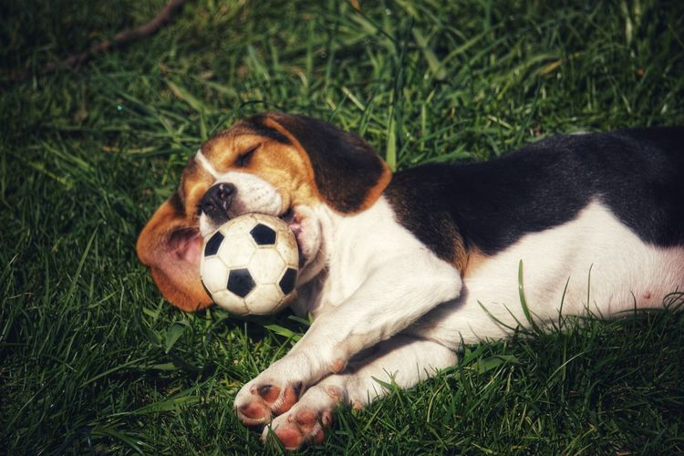Dog relaxing on grass