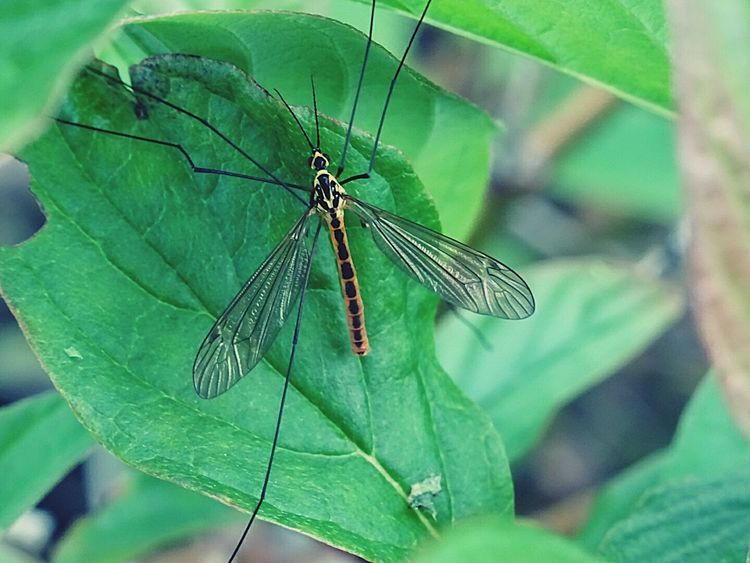 Insect Insetti Insect Photography Insect_perfection Insects Collection Insect Macro  Insect Photo Nature_collection Taking Photos Natural Photography Natural Beauty Natura Insetti 😨 Insetti Eyeem EyeEm Nature Lover