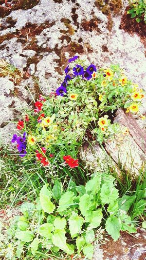 Multi Colored Day No People High Angle View Outdoors Flower Green Color Nature Growth Plant Close-up Beauty In Nature