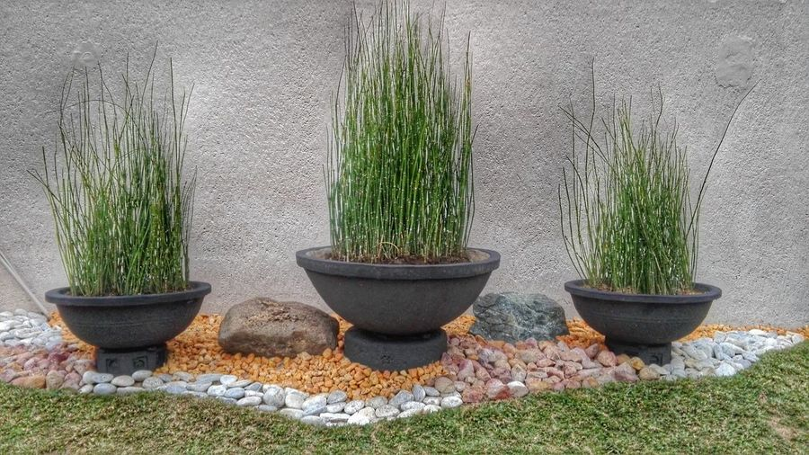 bamboo Neighbor's Green Beauty Beneath The Vase Vibrant Pigments Colourful Stones Variaties Of Life