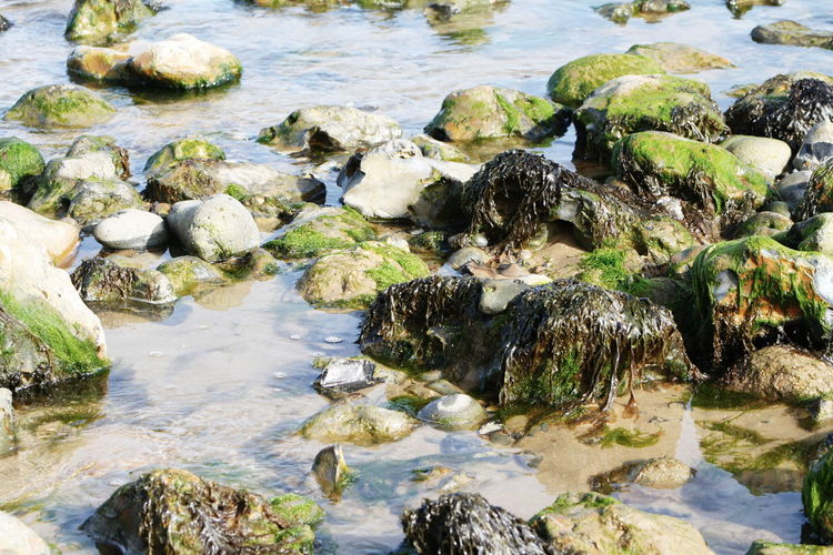 Water Rock - Object Flowing Moss Non-urban Scene Rock Rock Formation Nature Scenics Stream Beauty In Nature Tranquil Scene Sea Tranquility Shallow Day Rocky Coastline Geology Flowing Water Outdoors Norfolk Uk Ocean Cromer Coastline Cromer Beach