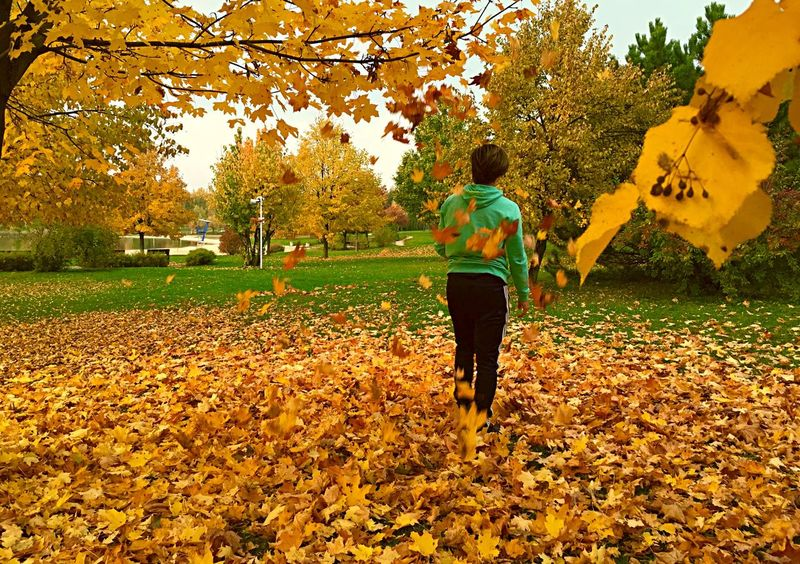 With Big Steps To Autumne🍃🍂 a sea of leaves Eye4photography  Eyem Best Shots October Tadaa Community