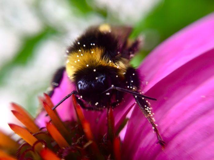 Macro Bug Macro