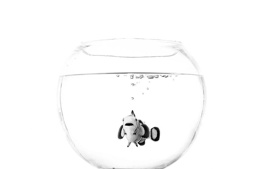 Bubble Blackandwhite Bowl Bubble Dissolving Drink Drinking Glass Drinking Water Fish Fishbowl Nemo No People Studio Shot Water White Background