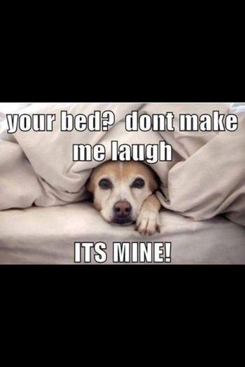 Bedtime Dogstagram Dogsbed Selfie