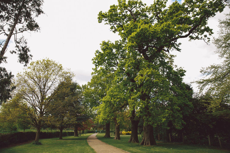 Beauty In Nature Day Diminishing Perspective Footpath Green Green Color Growth Landscape Lush Foliage Nature No People Non-urban Scene Nonsuch Nonsuch Park Outdoors Park Scenics Sky The Way Forward Tranquil Scene Tranquility Tree Tree Trunk Treelined Vanishing Point