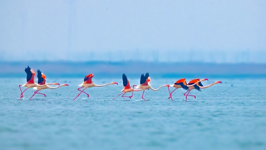 Group of birds on the sea