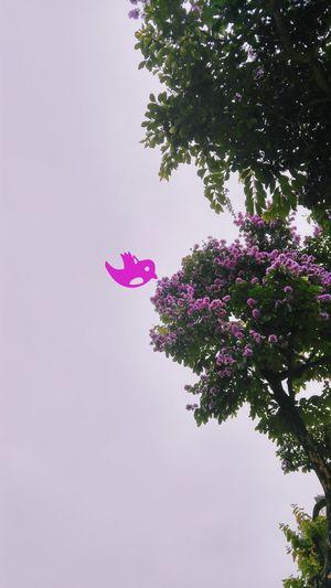 Flower Hanoi EyeEm Best Shots EyeEm Nature Lover