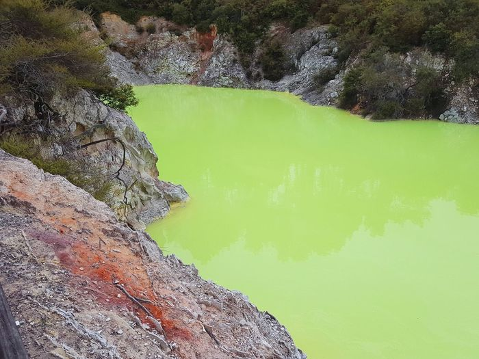 Devil's Bath. Green colour due to sulfur deposits that float to the top. Waiotapu geothermal park in North Island, New Zealand. Waiotapu Geothermal  Geothermal Activity Rotorua  New Zealand NZ North Island Crater Lake Crater Volcanic Landscape Volcanic  Sulfur  Sulfur Lake Sulfuric Green Lake Geology Nature Rock Rock Formation Travel Geological Formation Tree Golf Course Grass Tranquil Scene Geyser Idyllic Volcanic Activity Standing Water