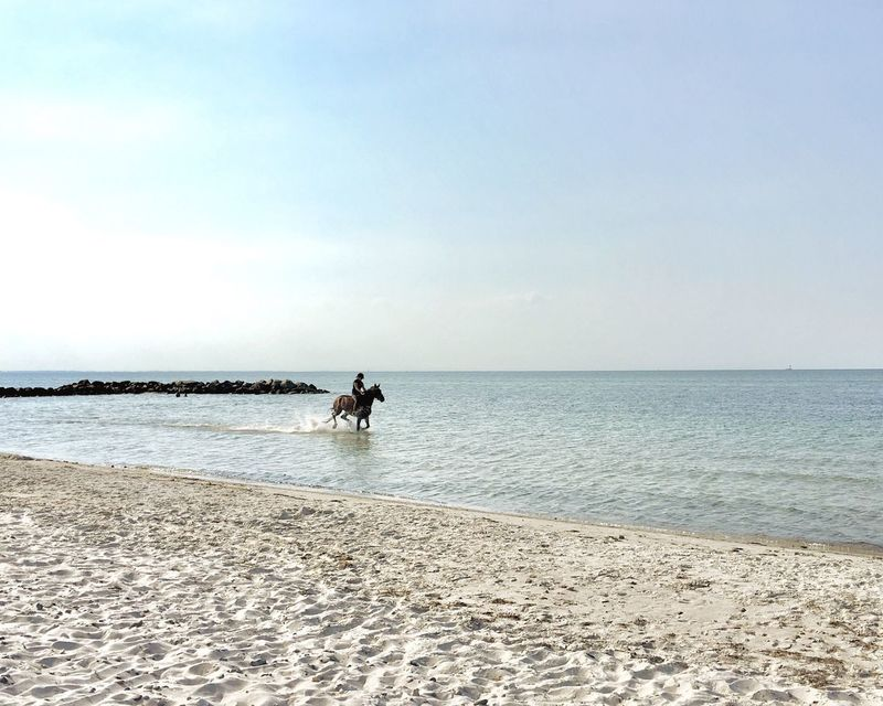 Sea Horizon Over Water Water Beach Nature Ride One Person Full Length Tranquil Scene Sky Sand Beauty In Nature Outdoors Day Tranquility Horse Clear Sky People Reitsport Reiten Ostseeküste Ostsee Strand Deutsches Reitpony Riding