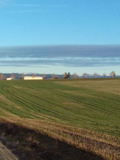 Nature Blue Agriculture Sky Landscape Scenics Rural Scene Outdoors No People Trees And Sky SnowcappedMontains