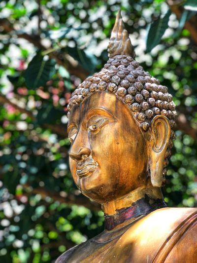 Buddha statue in the temple in Thailand Thailand Temple Thailand Temple Buddhist Buddha Buddhism Religion Religion Spirituality Belief Statue Sculpture Representation Human Representation