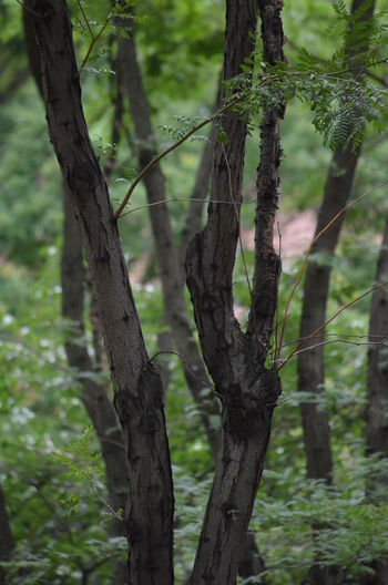 A Tree Grows In Brooklyn Bark Beauty In Nature Branch Close-up Day Focus On Foreground Forest Green Color Growing Growth Nature No People Outdoors Scenics Selective Focus Tranquil Scene Tranquility Tree Tree Trunk Urban Forest WoodLand