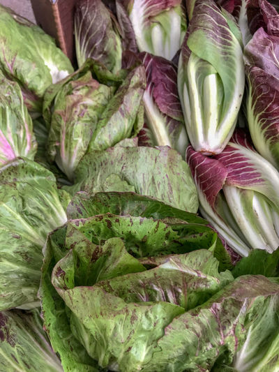 Farmers Market Fresh Produce Nature Abundance Backgrounds Bok Choy Cabbage Close-up Day Food Food And Drink Freshness Full Frame Green Color Healthy Eating High Angle View Large Group Of Objects Market No People Organic Purple Raw Food Still Life Vegetable Wellbeing