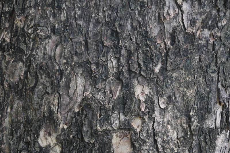 Backgrounds Built Structure Close-up Day Full Frame Gray Nature No People Outdoors Pattern Rough Textured  Tree Tree Trunk Wood - Material