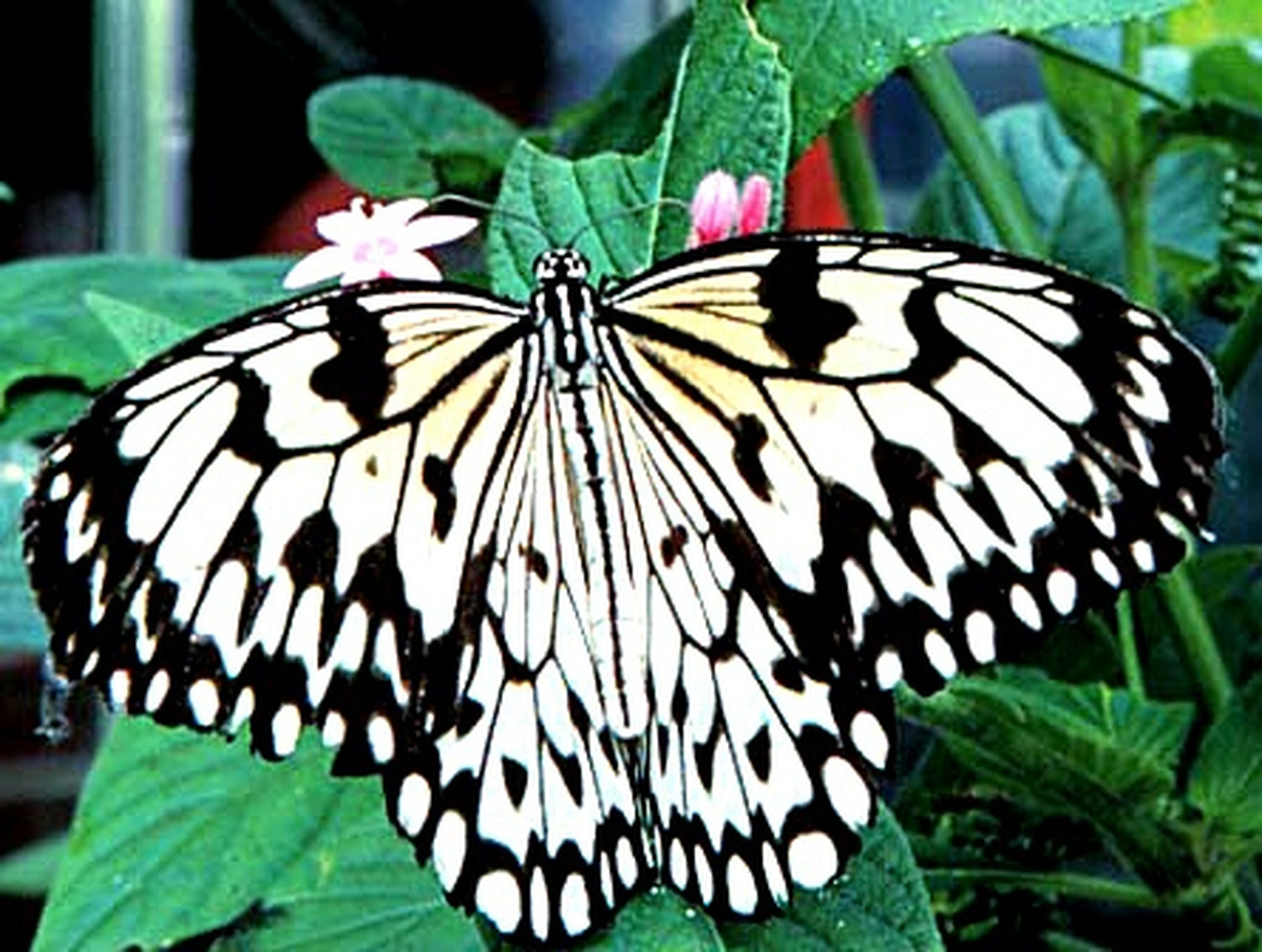 butterfly - insect, insect, animals in the wild, one animal, animal themes, leaf, animal markings, wildlife, butterfly, close-up, natural pattern, focus on foreground, animal wing, plant, beauty in nature, nature, green color, growth, pattern, outdoors