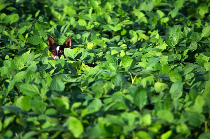 Animal Themes Green Color Leaf Nature Beauty In Nature No People Animals In The Wild Outdoors Dogs