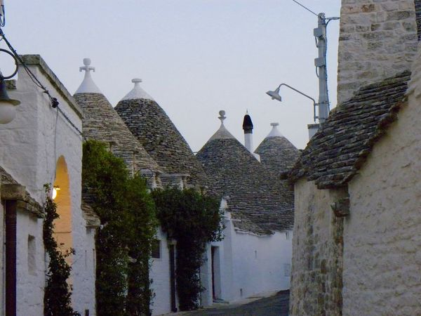 Alberobello Alberobello - Puglia Alberobello City Alberobellocity Alberobelloexperience Alberobellophotocontest Animal Themes Animal Wildlife Animals In The Wild Architecture Bird Building Exterior Built Structure Clear Sky Day Flying Low Angle View Nature No People One Animal Outdoors Sky Spread Wings