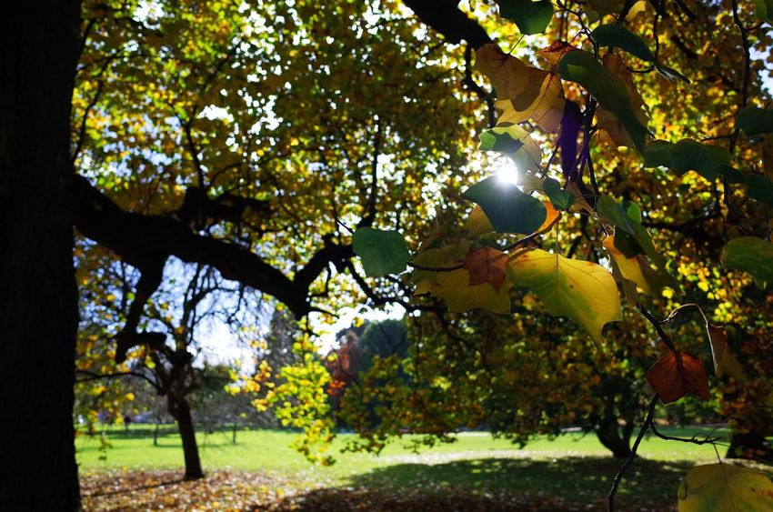 Autumn Autumn Colors Yellow And Green Bute Park Sun Seeing Through Trees Leaves🌿 Afternoon Perfect Saturday Afternoon