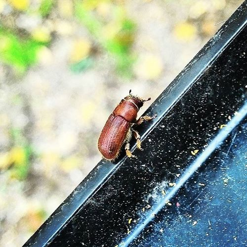 Beatle Bugs Nature Beautiful Tiny Brown Home Forestbugs Life Love Living Forest Little