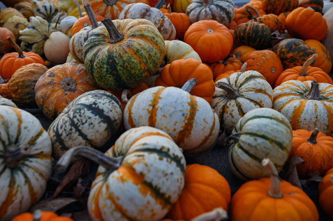 Abundance Autumn Backgrounds Choice Close-up Day Food Food And Drink Freshness Gourd Halloween Healthy Eating Holiday - Event Large Group Of Objects Market No People Orange Color Outdoors Pumpkin Raw Food Squash - Vegetable Vegetable
