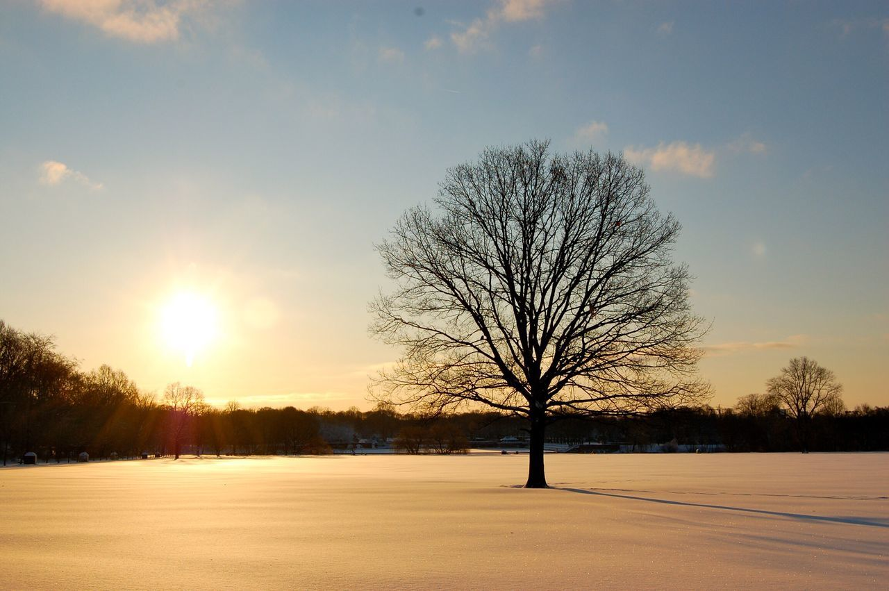 bare tree, winter, cold temperature, snow, tree, tranquility, beauty in nature, sunset, scenics, tranquil scene, majestic, nature, lone, landscape, cold, branch, remote, silhouette, sky, outdoors, tree trunk, no people, day