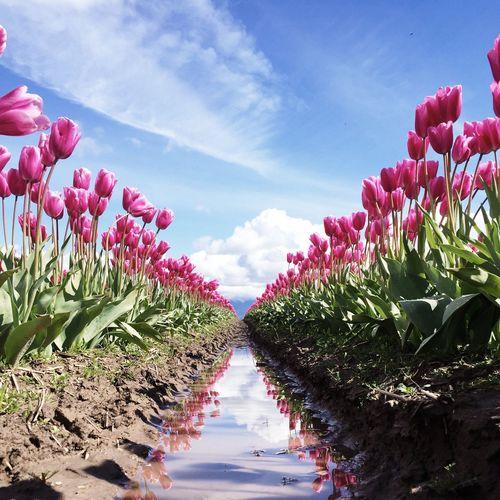 EyeEm Best Shots Eye4photography  Flowers Tulips