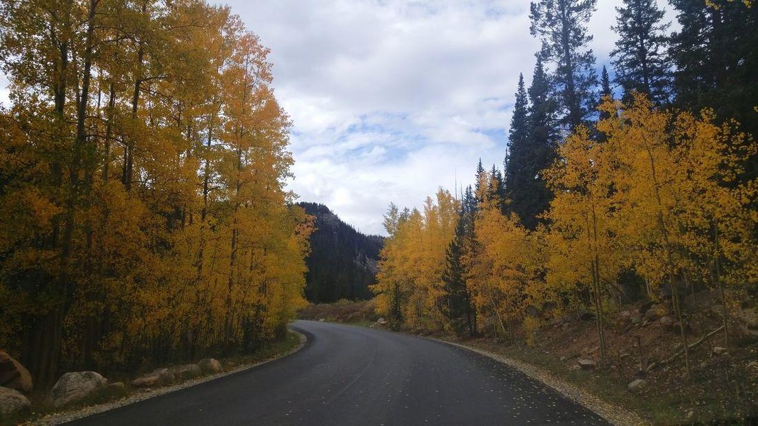 Fall Leaves Autumn Fall Colors Fall Beauty Aspen Trees Colorado Autumn Colors Autumn Leaves Tree