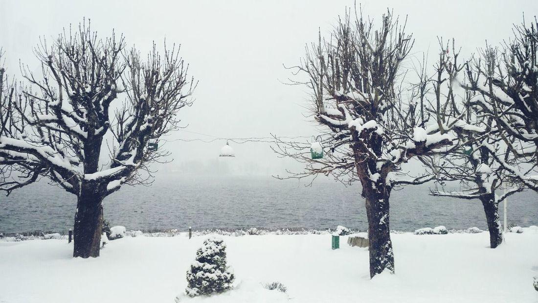 Winter Trees Lake Travel Snow February Austria Silence