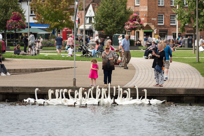 A grand daughter and her grand mother feeding a folk of Mute Swans and other water foul at the river side park in Stratford on Avon, Warwickshire. Feeding  Feeding Animals Grand Daughter Grand Parents Mute Swan Stratford On Avon Stratford-upon-Avon Adult Child Floki Grand Mother Grandchild Leisure Activity Lifestyles Outdoors Park People Real People The Riverside Water Water Foul Women