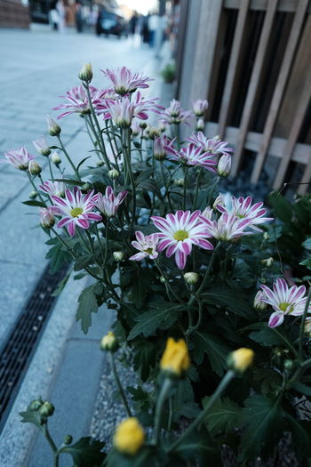 2016-10-14 Flower Fragility Freshness Plant Nature Beauty In Nature Growth Blooming Petal Flower Head Water Purple Outdoors Blossom Day No People Close-up Greenhouse Streetphotography Street Photography
