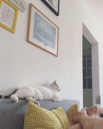 Low angle view of cat relaxing at home