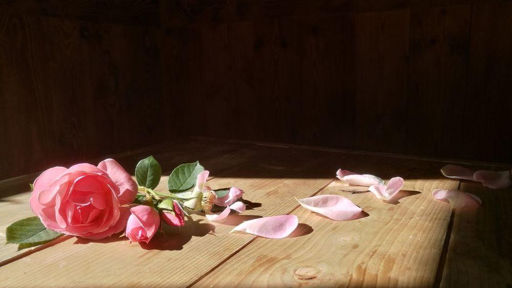 Flower Pink Color Wood - Material Wood Nature Roses Rosé Roserosa Fiori Natura Lightandshadow