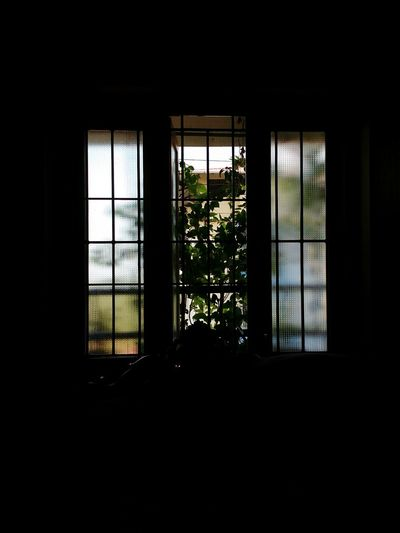 A green view Green Window Day View WINDOW WITH A VIEW Indoors  No People Architecture