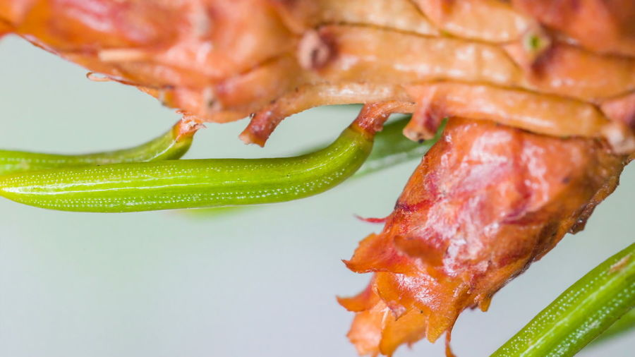 Close-up of fresh red chili peppers in plate