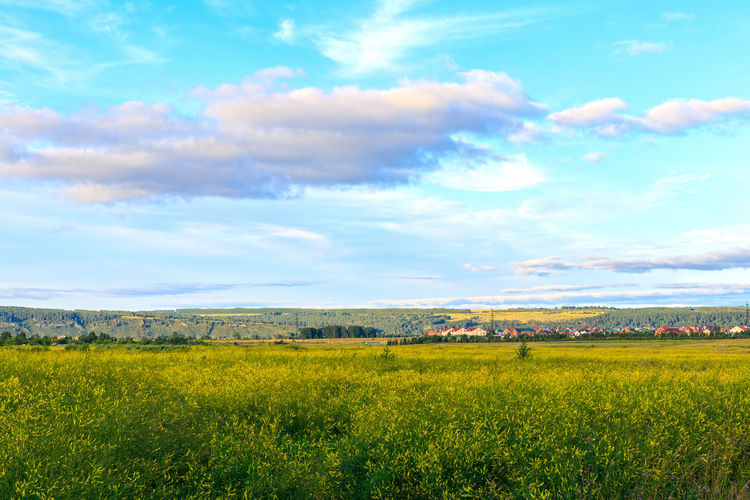 Beauty In Nature Cloud - Sky Environment Field Grass Growth Land Landscape No People Outdoors Rural Scene Scenics - Nature Siberia Sky Summer Tranquil Scene Tranquility Yellow