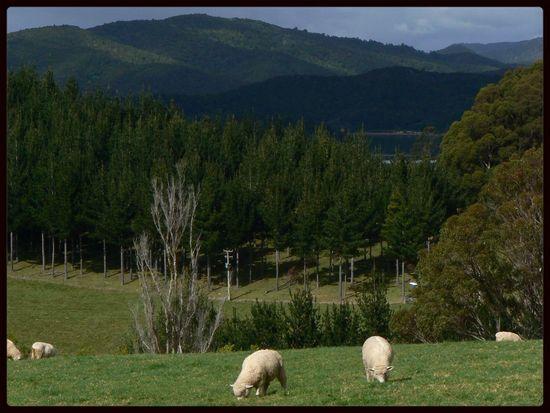 Landscape New Zealand 2007