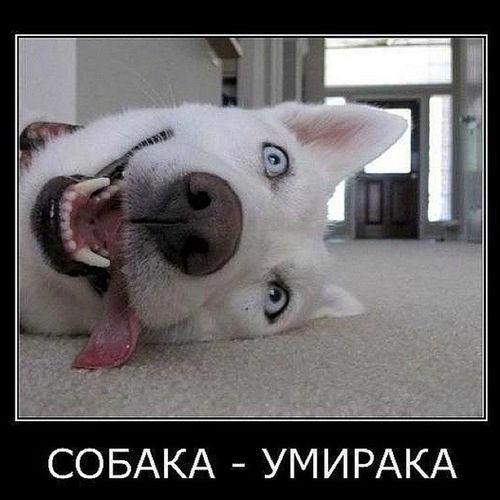 собака умерака