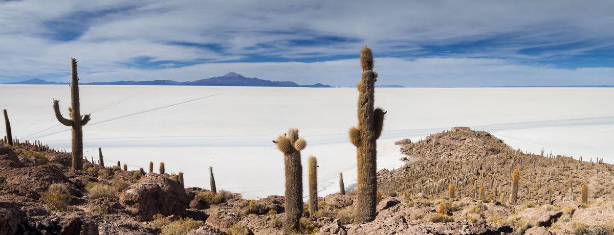 Panorama of Salar de Uyuni as seen from Isla Incahuasi, Bolivia Arid Climate Bolivia Cactus Cloud - Sky Day Desert Isla Incahuasi Landscape Mountain Mountain Range Nature No People Outdoors Panorama Salar De Uyuni Salt Lake Scenics Sky