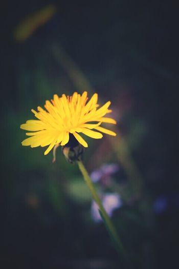 🌻🌞 Green Spring Flowers Flowers Flowerporn Earthphoto Inlove Happy Yellow Flower Sun