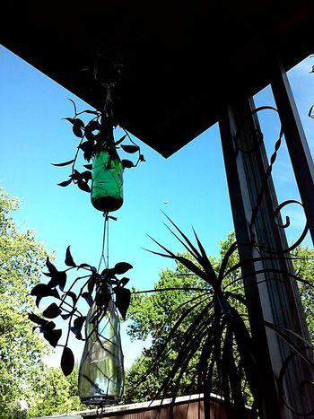 I hang my starter plants in glass bottles! Starterplants Babyplants Glassbottles Hangingplant SunCatcher  Wanderingjew