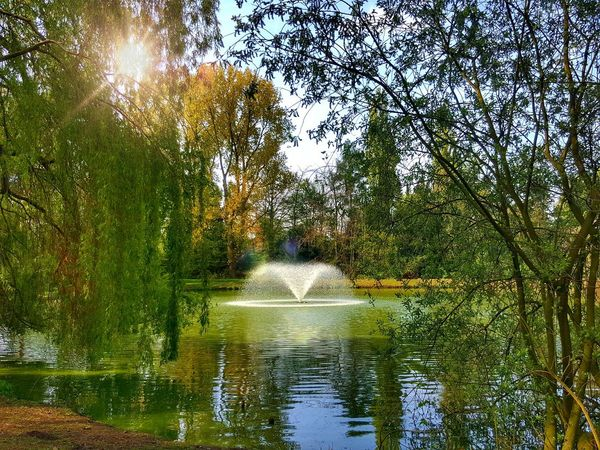 Nature on my doorstep... 😍 Werne A.d. Lippe Ruhrgebiet Beauty In Nature Outdoors Reflection Tree Water Nature Growth The Great Outdoors - 2017 EyeEm Awards EyeEm Gallery Live For The Story EyeEmNewHere BYOPaper! EyeEm Nature Lover EyeEm Best Shots - Nature Green Green Green!  Nature Photography Nature On Your Doorstep Springtime Enjoying Life Enjoying The Sun Sun NRW Nrw Germany Lost In The Landscape #urbanana: The Urban Playground